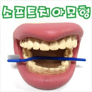 소프트 치아모형
