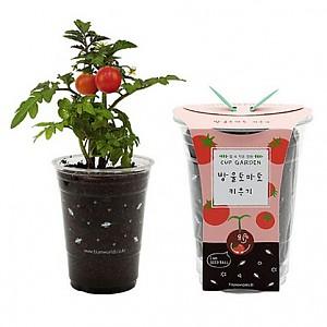 컵가든 방울토마토(5세트)