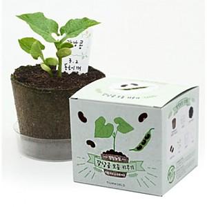 팜팜농장 강낭콩(5세트)